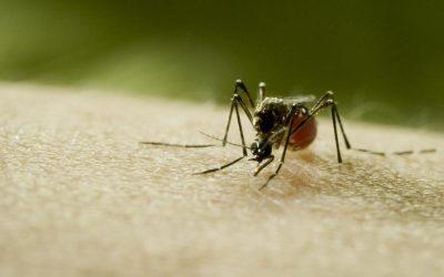 L'Ajuntament demana que el control de mosquits sigui declarat servei públic imprescindible