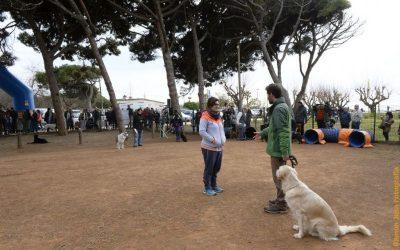 Normes per passejar el gos: trajectes curts, una sola persona i a prop del domicili