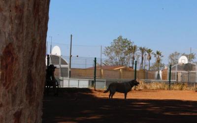L'Ajuntament obre tots els espais d'esbarjo per a gossos de la ciutat