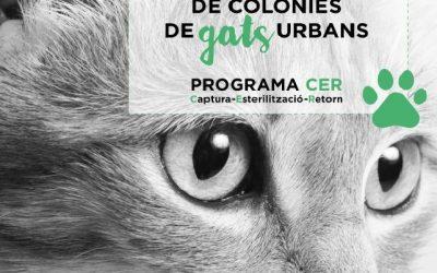 El voluntariado garantiza la protección de las 150 colonias de gatos de la ciudad