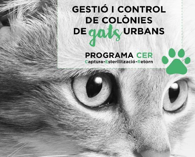 Voluntariat vetlla per la protecció de les 150 colònies de gats que hi ha a la ciutat